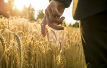 αγγίζοντας το στάχυ, τον καρπό της ζωής βιολογικά τρόφιμα - viologika proionta 10305 NaturesHouseGR  220x140 - βιολογικά προϊόντα – βιολογικά τρόφιμα