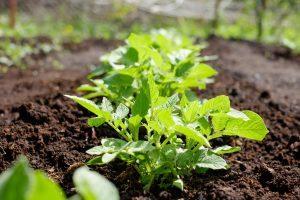 βιολογικά τρόφιμα βιολογικά λαχανικά βιολογικά τρόφιμα - viologika proionta 55448 NaturesHouseGR  300x200 - βιολογικά προϊόντα – βιολογικά τρόφιμα