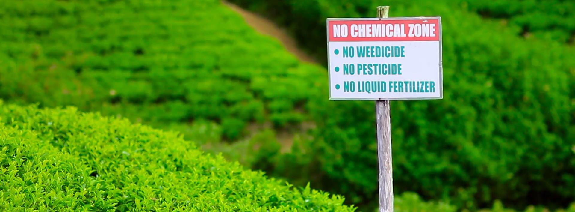 βιολογικά προϊόντα - organiko tsai natureshousegr - βιολογικά προϊόντα Nature's House